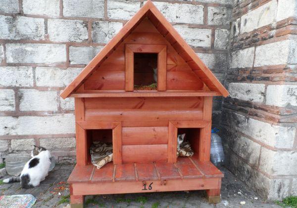 Sokak kedilerinin de evi oldu n Sokak kedileri kedi evinde barınacak...