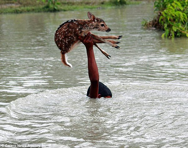 Yavru geyiği yakaladı ve başının üstünde tuttu.