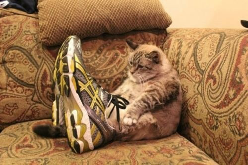 kedi-ayakkabi