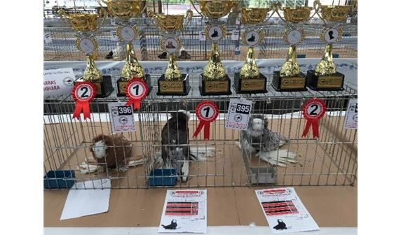 kuş festivali Kuş Sevdası 700 Kilometre Yol Yaptırdı