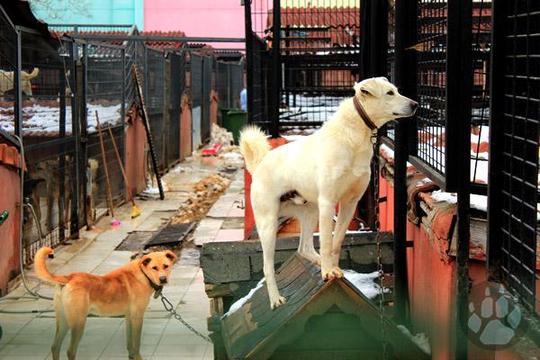 yedikule hayvan barinagi8 Ladik Ziraat Odası Başkanı Demirden kene uyarısı