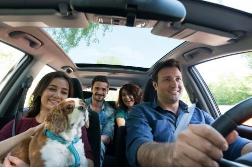 Evcil Hayvanla Yolculuk 1 500x333 BlaBlaCar ile evcil hayvanınızla yolculuk keyfi