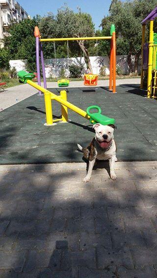 erdinç kıvılcım köpek Evcil Der Başkanı Çetin: Nesrin Hanımın tecrübelerinden faydalanmak isteriz