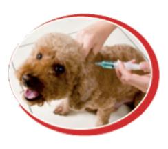 sedatifler  WİN PET ile sıkıntılı nekahat sürecine son!