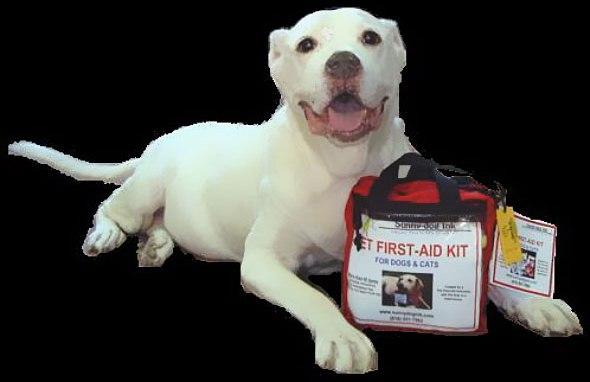 İlk Yardım Çantası Vet.Hek.Mine Çağlar KONDU Açıkladı: Evcil Hayvanlarda İlk Yardım