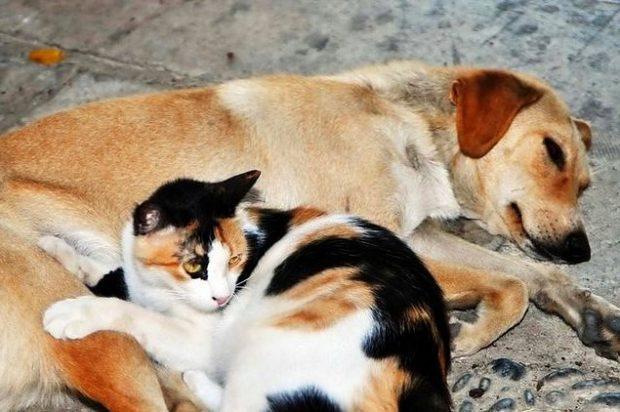 1 620x412 Sokaklarda Yaşayan Hayvanlar Hakkında Bilmeniz Gereken 15 Gerçek