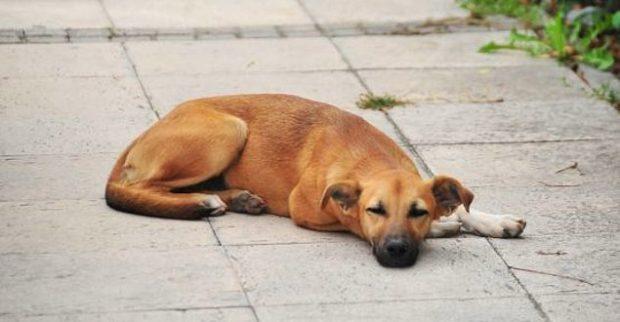 10 620x322 Sokaklarda Yaşayan Hayvanlar Hakkında Bilmeniz Gereken 15 Gerçek