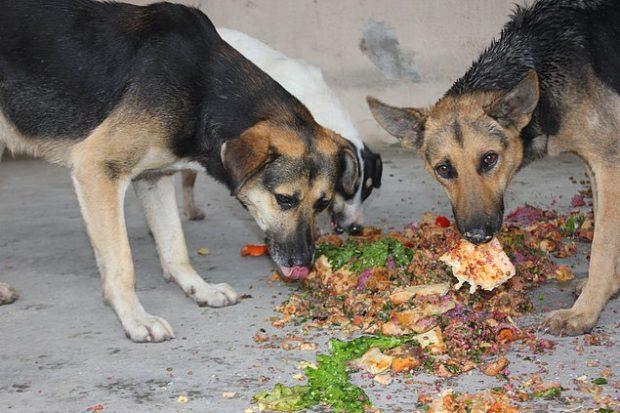 13 620x413 Sokaklarda Yaşayan Hayvanlar Hakkında Bilmeniz Gereken 15 Gerçek
