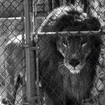 arjantin-hayvanat-bahcesı-1