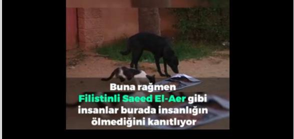gazze mağdur Savaş Mağduru Hayvanları Sulala Hayvan Eğitim ve Bakım Merkezinde Sosyalleştiriyor