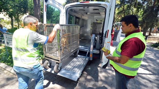 izmir brnk 6 bin 314 sokak hayvanına acil müdahale
