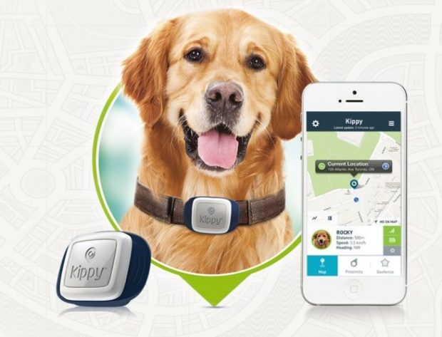 köpek gps 620x473 İskece Belediyesi: Hayvanlarınızın elektronik künyesini tescillettirin