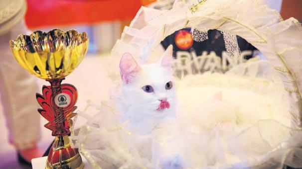 'En güzel kedi' festivali