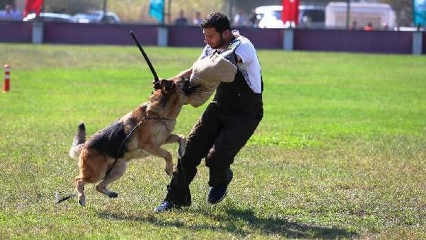 Almn çbn kpğ Alman çoban köpekleri, sokak hayvanları için yarıştırıldı