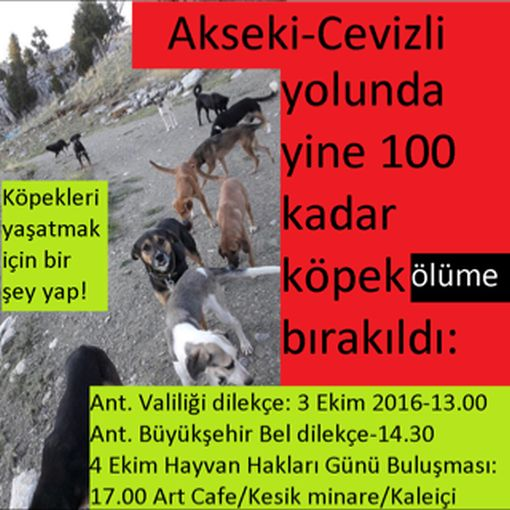 antalya1 Antalya'da dağlara bırakılan onlarca köpek kaderine terk edildi
