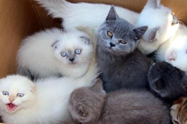 gmrk2 Gümrükten ihale ile satılan kedilerin 5i öldü