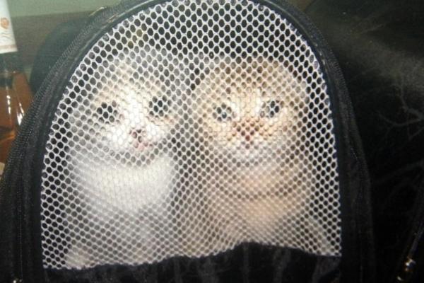 gümrük kedi Gümrükten ihale ile satılan kedilerin 5i öldü