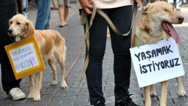 hayvan haklari yasasi 620x350 Hayvan koruma yasası, hayvanları korumuyor!
