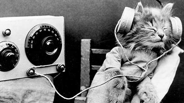 Kediler için müzik albümü listebaşı