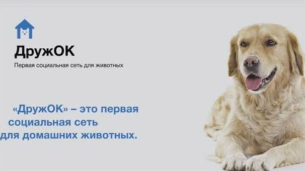 Rusyada Köpekler İçin Facebook Geliyor