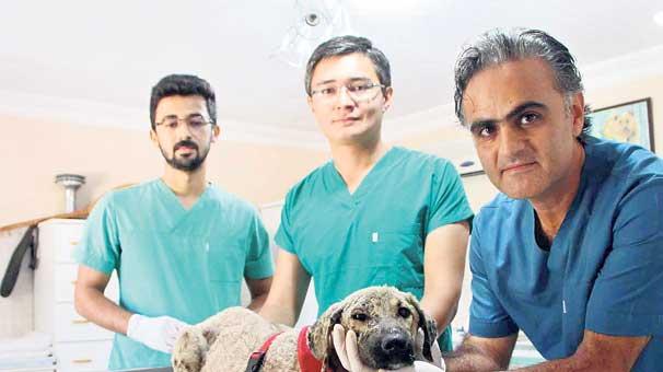 Ziftten kurtarılan köpeği İngiliz çift sahiplendi