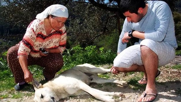bodrum zehir Bodrum'da zehirlenen köpek ve kediler telef oldu