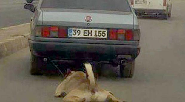 caniyi bulun8803 620x343 Çorlu'da Aracın Arkasına Bağlanarak Sürüklenen Köpek Kurtarıldı