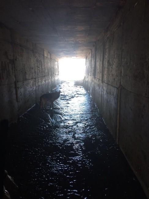 diyarbakir da egitimli kopeklerin tespit etti 8983812 o Eğitimli Köpeklerin Tespit Ettiği El Yapımı Patlayıcı İmha Edildi