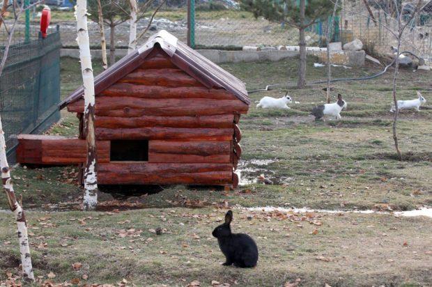 """erzurum 620x412 Kış kentinde sahipsiz hayvanlara """"sıcak yuva"""""""