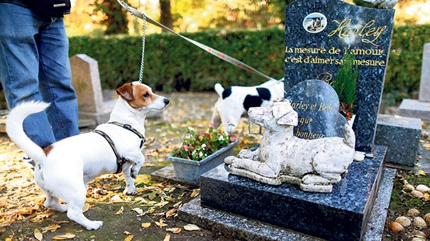 117 Yıllık Hayvan Mezarlığı