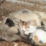 kedi-köpek dostluğu