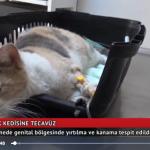 kediye tecavüz
