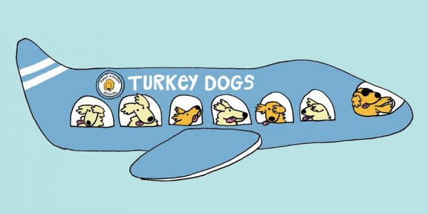 plane logo blue 620x311 ABDliler 'Golden'ları topluyorlar