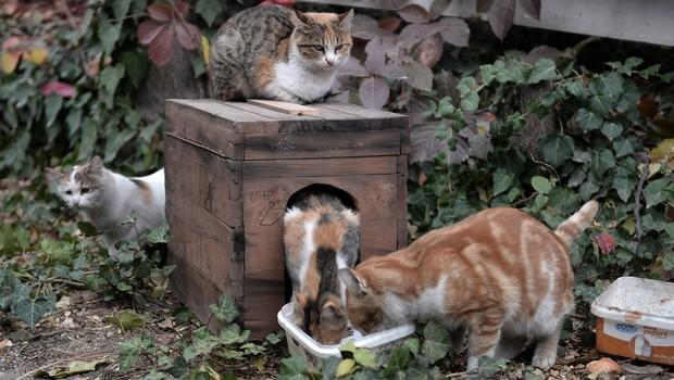 seçim sandıkl Seçim sandıkları kedi yuvası oldu