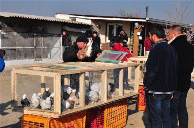 2 bin güvercin ihaleyle satışa çıkarıldı