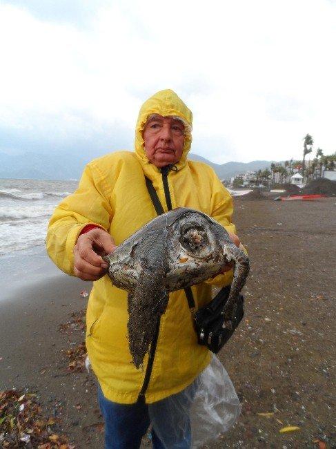 carettanin basi kopmus halde oldugu goruldu Marmariste sahile ölü caretta vurdu