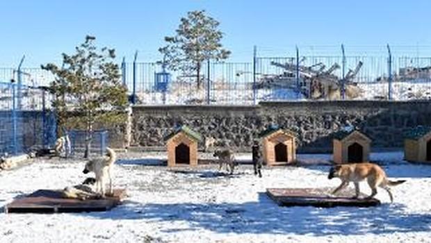 erzurum Erzurumda kar altındalar ama altlıkları var! (Buna şükür!)