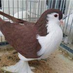 kanatlı1