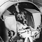 Laika  Dünyanın yörüngesine ilk kez 1957 yılında bir canlı gönderildi.