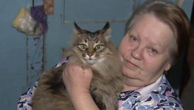 sokak kedisi2 620x352 Sokak kedisi bebeğin hayatını kurtardı!