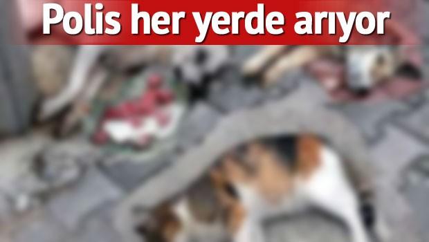 zehirleme antalya Antalya'da 12 köpek ve 2 kediyi zehirlediler