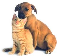 20101130015130_dogcat