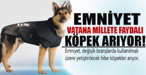 emniyet_vatana_millete_faydali_kopek_ariyor_h21363 (1)
