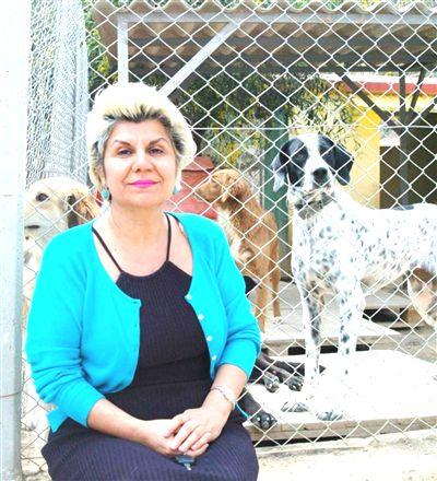 yarali-hayvanlarin-tedavisinde-sigorta-oneris-3760712_o