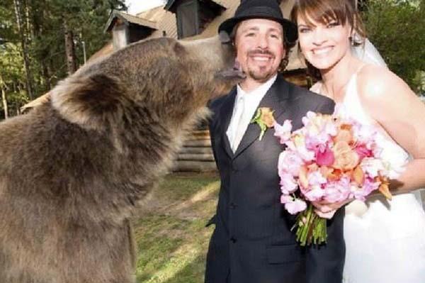 Brütüs, Casey'nin düğününde bile vardı!