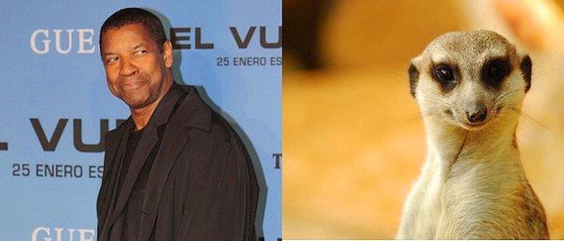 En İyi Erkek Oyuncu: Denzel Washington = Mirket