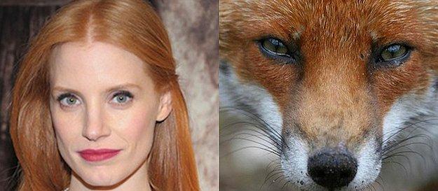 En İyi Kadın Oyuncu: Jessica Chastain = Tilki