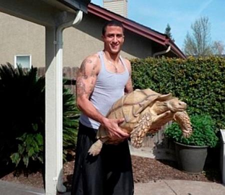 52 kg'lık ev kaplumbağası Sammy